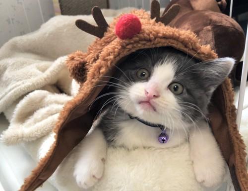 トナカイのかぶりもののネコ