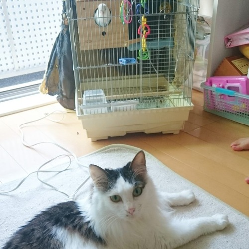 インコと愛猫