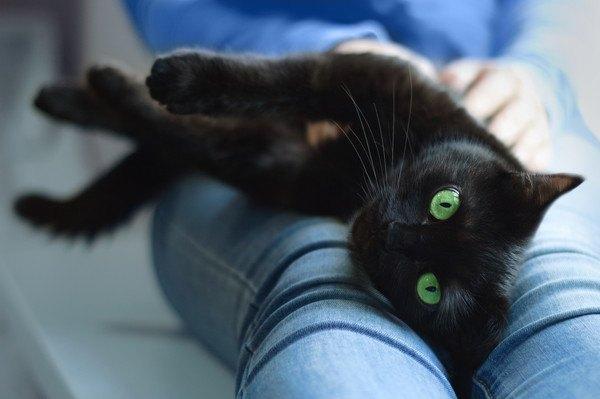 人の膝の上で寝転ぶ黒猫