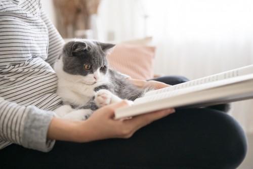 本を読む人の上にいる猫