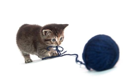 紐状のおもちゃで遊ぶ猫