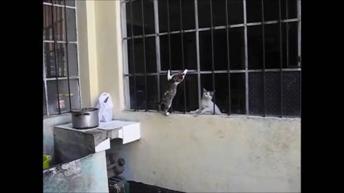 母猫と子猫