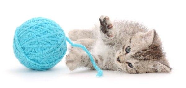 青い毛糸のおもちゃで遊ぶ子猫