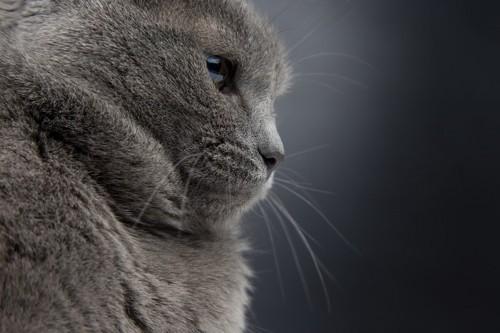 何かを考えているような猫