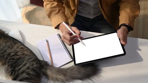 仕事をしている机に座る猫