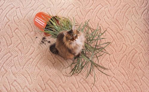 鉢植えを倒した猫