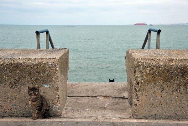 堤防にいる猫
