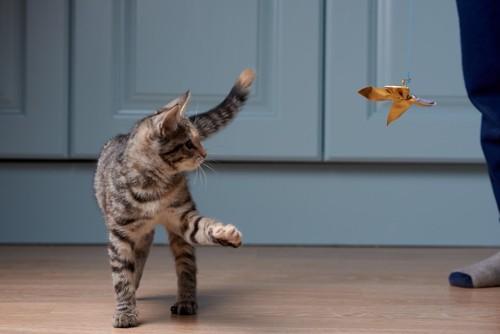 おもちゃに興味を示す猫