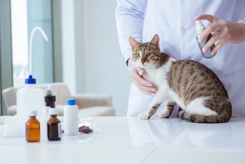獣医師にスプレーされている猫