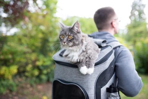 リュック型のバッグから顔を出す猫