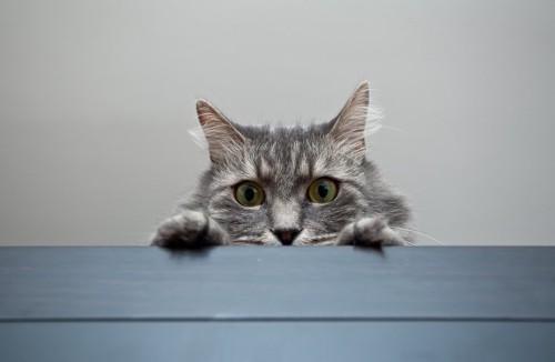 影からこっそりこちらを見ている猫