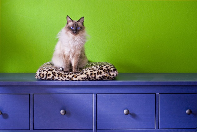 ヒョウ柄のクッションの上に座る猫