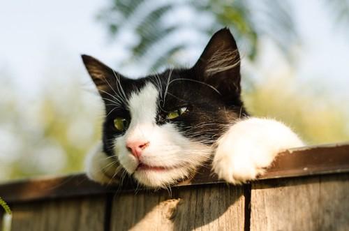 塀からのぞき込む猫