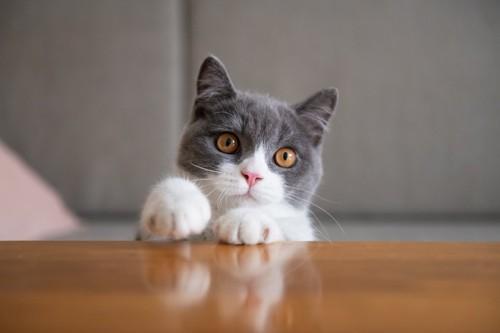 テーブルから顔を覗かせる猫