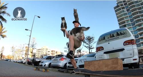 人間に飛び乗る猫3