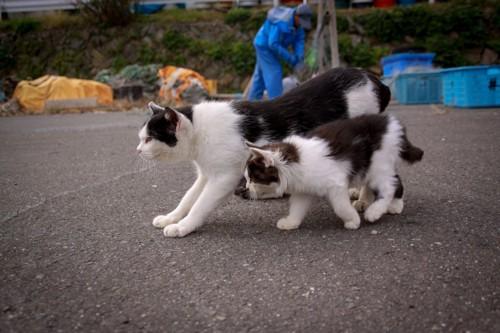 隣を歩く猫