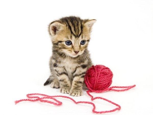 子猫の足元に転がる毛糸