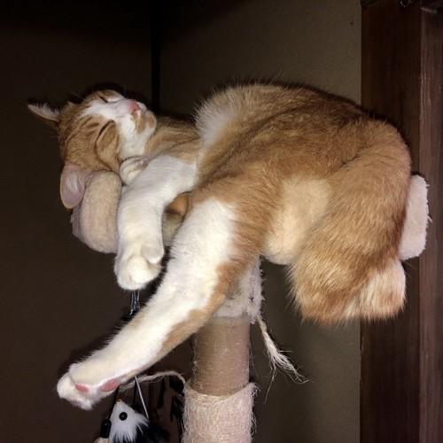 タワーで眠る猫