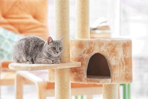 キャットタワーの上で休む猫