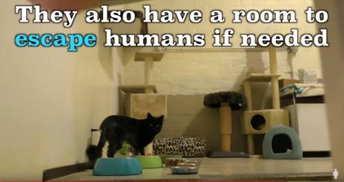 猫専用の部屋に黒猫