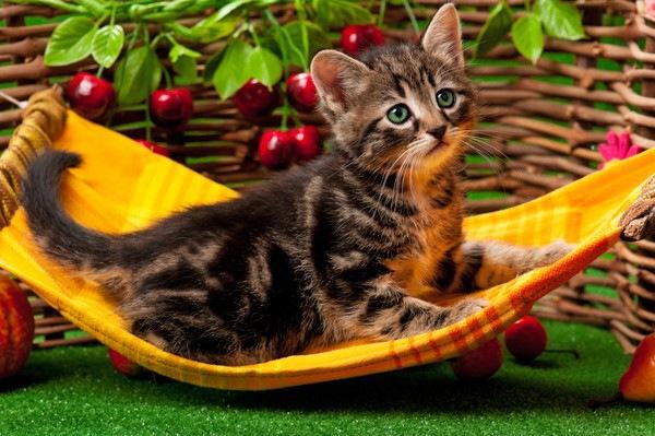 小さいハンモックに乗る子猫