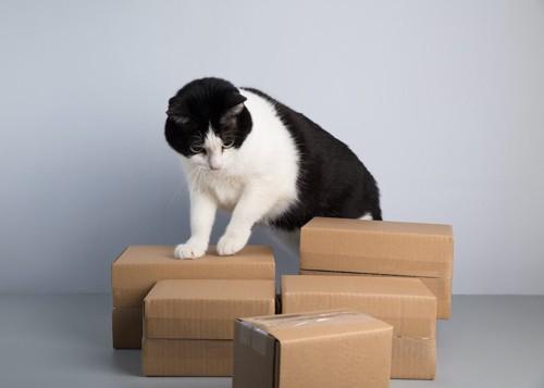 たくさん置かれたダンボール箱に乗る白黒の猫