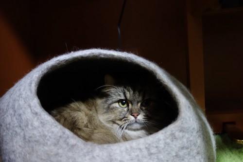 ドーム型の猫用ベッドに隠れる猫