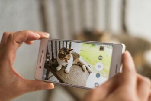 携帯で猫の写真を撮る人