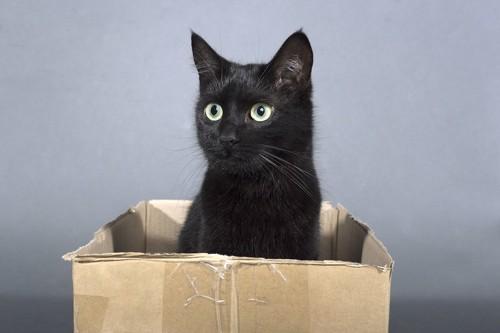 ダンボールの中にいる黒猫