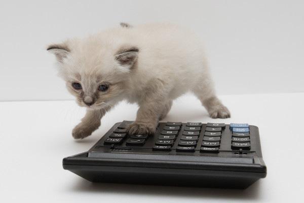 電卓を押す猫