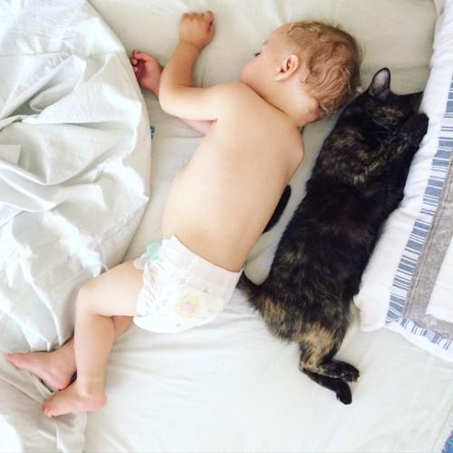 猫と一緒に寝る赤ちゃん