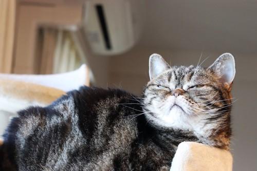 眩しそうな猫