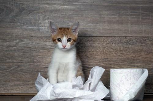 トイレットペーバーと子猫
