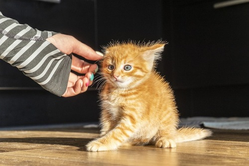 人の手を怖がる猫