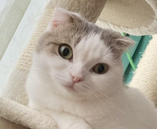 飼い主さんを看病した猫