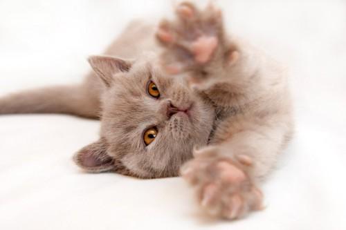 体を伸ばす猫
