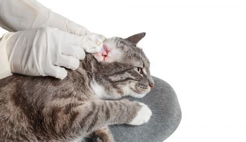 治療を受ける猫