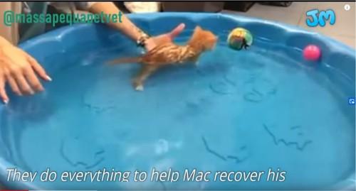 水に入る猫