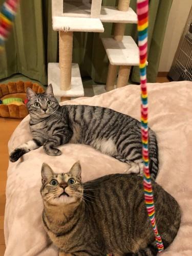 山野りんりんさんの猫たち