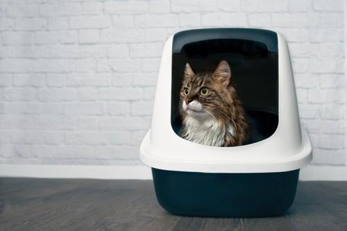 システムトイレに入る猫