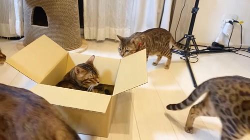 箱の中で目を閉じる猫