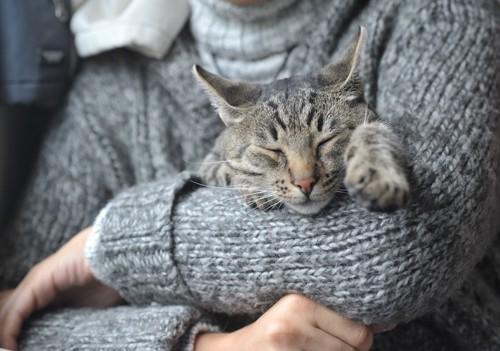 中絶をして飼い主に抱っこされて眠る猫