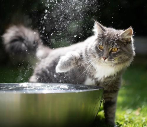 好奇心旺盛な猫