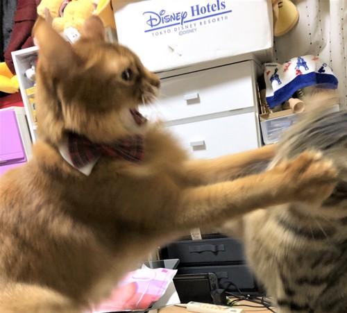 喧嘩中の猫