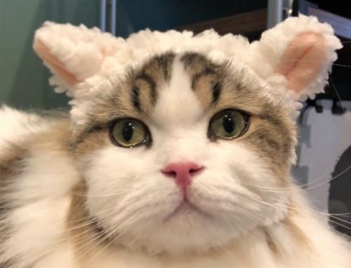 羊に変身した猫