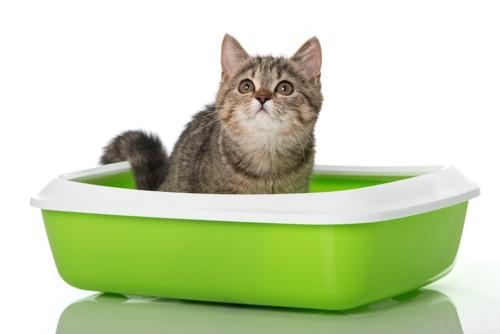 トイレに入って用を足す猫