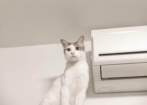 エアコンの横にいる猫