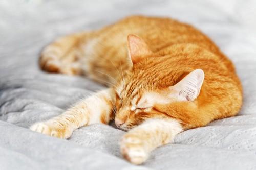 お腹を隠して寝る猫
