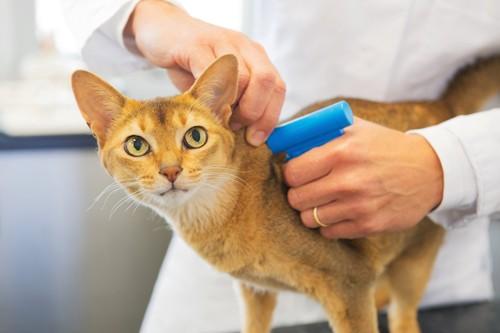 病院でマイクロチップを埋め込まれる猫