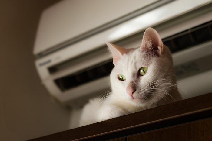 エアコンの下にいる猫